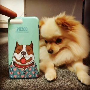 iPhone 7 and iPhone8 case with dog